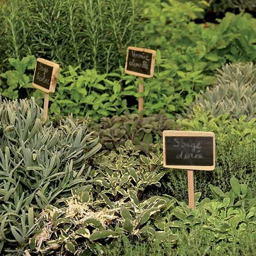 les herbes aromatiques bio en cuisine l 39 union. Black Bedroom Furniture Sets. Home Design Ideas